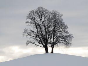 1152265_tree